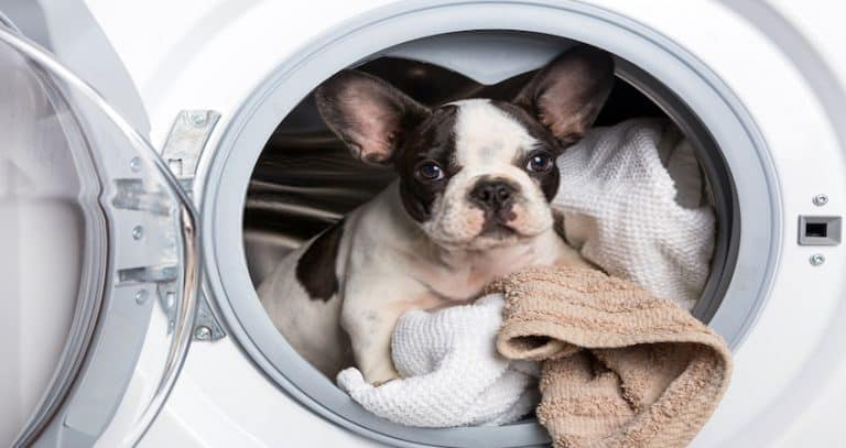 Best Washer Dryers for Tiny House Living